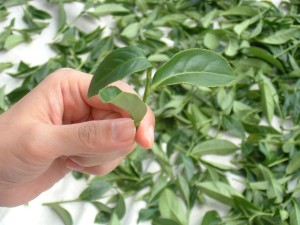3 Important Questions to Ask Anyone in the Tea Industry