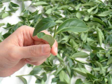 tea leaf from china
